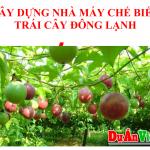 xay-dung-nha-may-che-bien-trai-cay-dong-lanh
